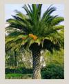 palmeras-100X121