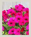 plantas-de-temporada-100X121