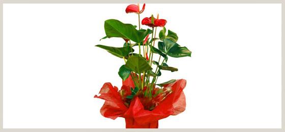 regalos-560x260